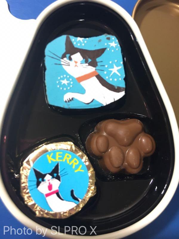 ゴンチャロフ 、ネコ、チョコレート