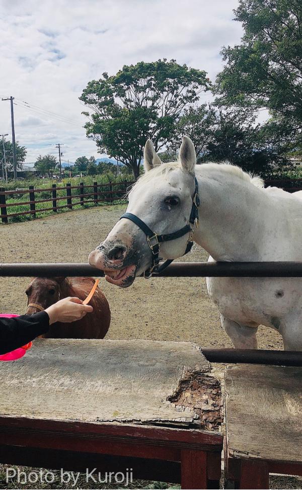 馬に人参をあげる