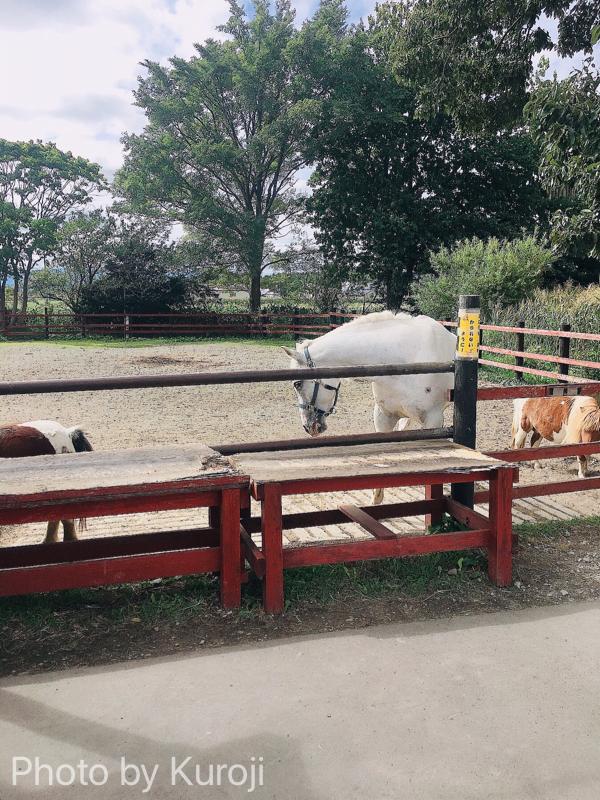 トンデンファーム敷地内の馬