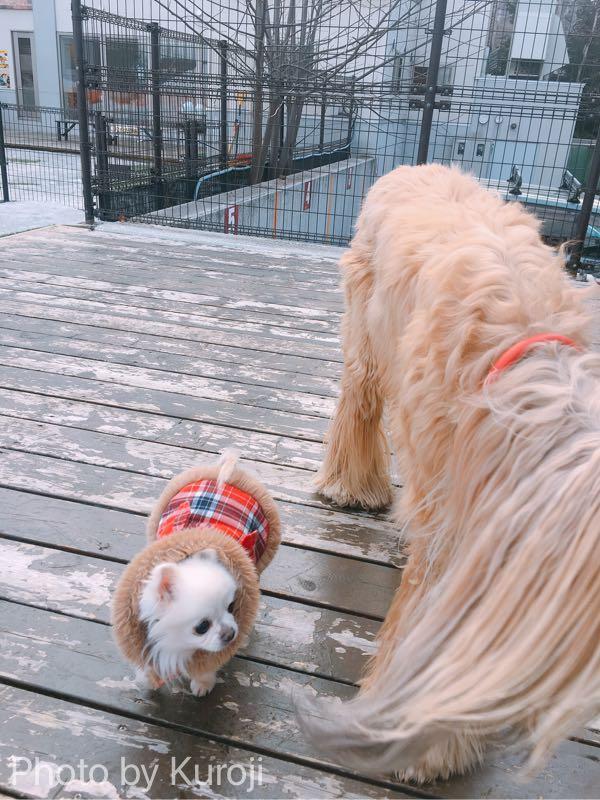 大型犬と遊ぶ愛犬