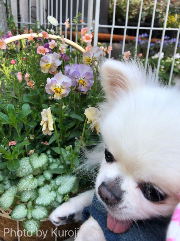 お花とるいくんうつむき顔