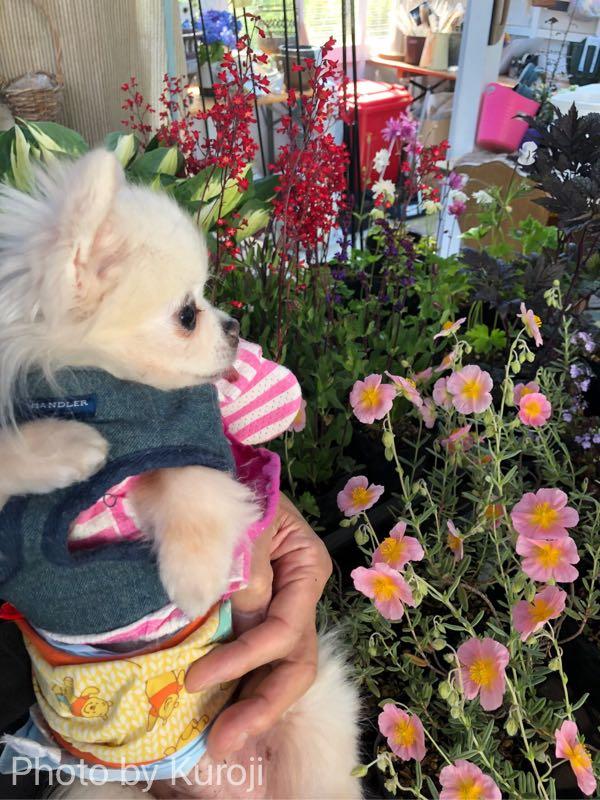ピンクのお花とるいくん